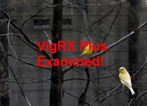 VigRX Plus Australia Official Supplier