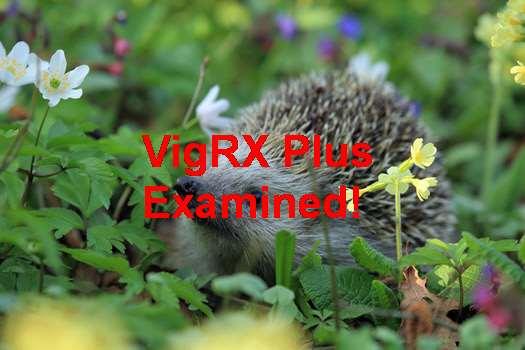 VigRX Plus Reviews 2018